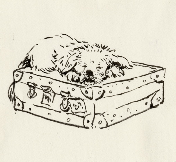 Dog on a Suitcase